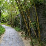 a-green-road-in-the-garden